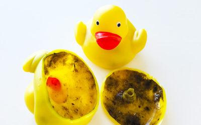 Pas på mug i badeænder